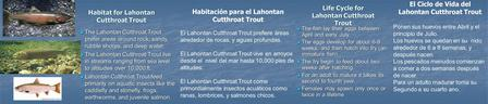 Life Cycle for Lahontan Cutthroat Trout The fish lay their eggs between April and early July. The fish lay their eggs between April and early July. The.