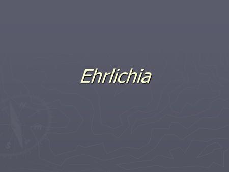 ehrlichia spp ac suero