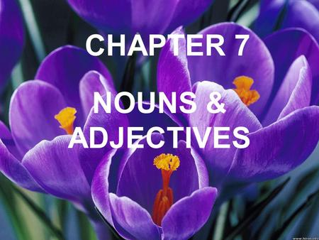 CHAPTER 7 NOUNS & ADJECTIVES. la boca mouth el brazo arm.