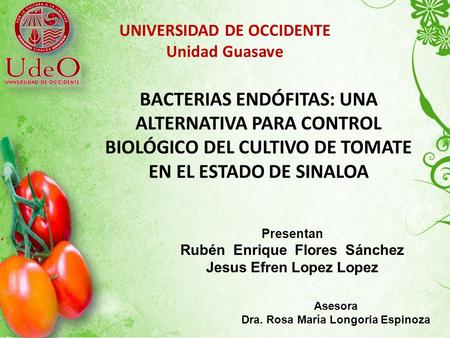 UNIVERSIDAD DE OCCIDENTE   Unidad Guasave