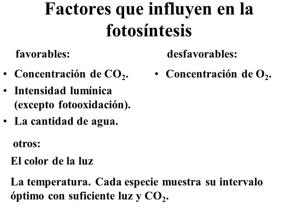 Fotosíntesis anoxigénica No se produce O 2 sino otras sustancias.