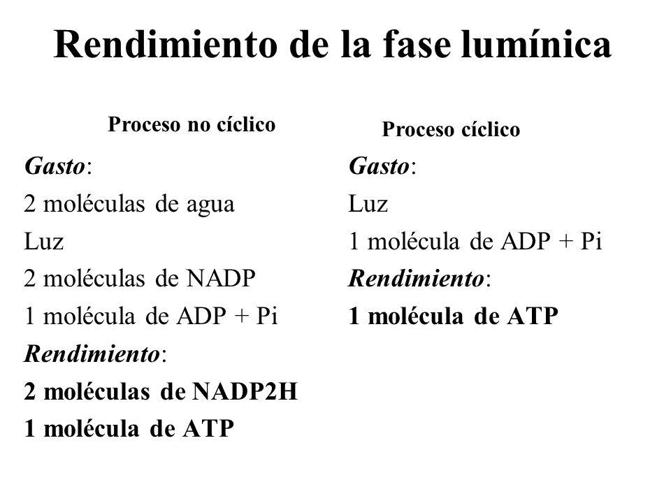 Fotofosforilación membrana del tilacoide estroma espacio tilacoidal Z FSII Q PQ b 6 -f PC FSI Fd partícula F 4e - H2OH2OO2O2 4H + H+H+ H+H+ H+H+ H+H+ 2NADP2NADP2H 4e - H+H+ ADP + Pi ATP Luz