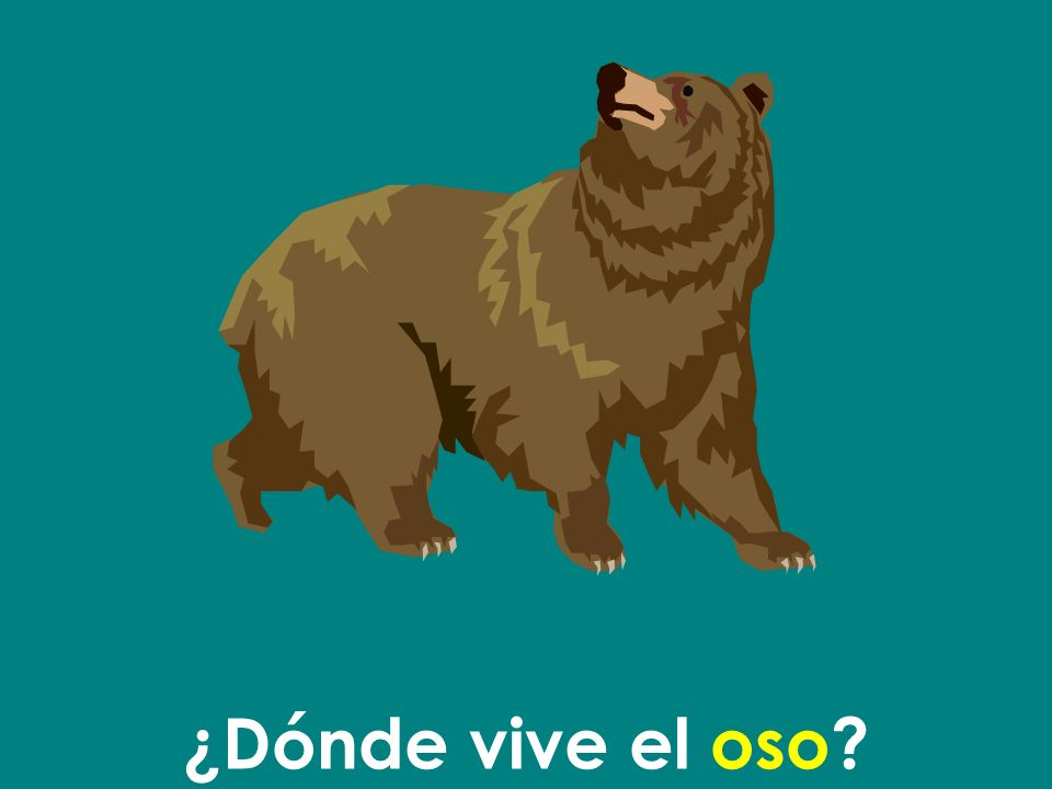 El oso vive en el bosque.