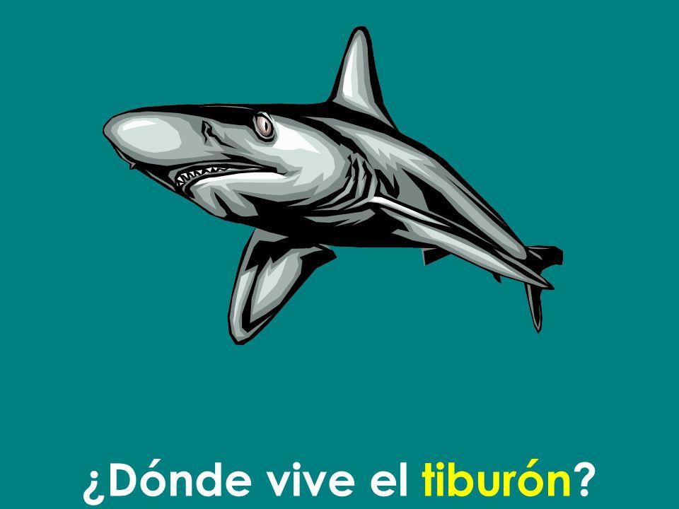 El tiburón vive en el mar.