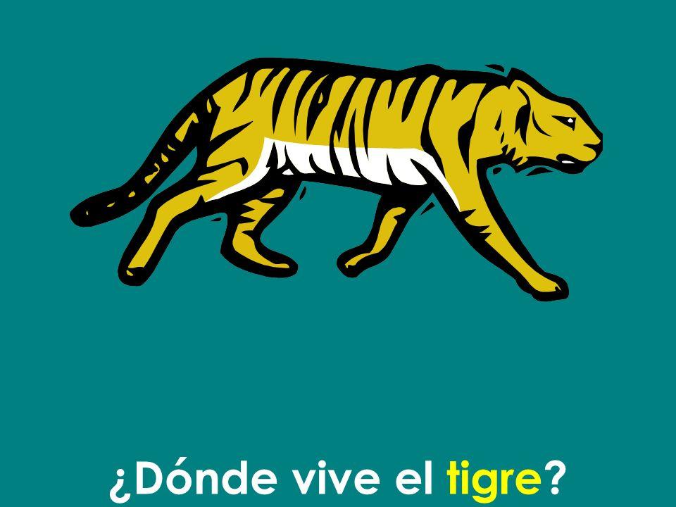 El tigre vive en la selva.