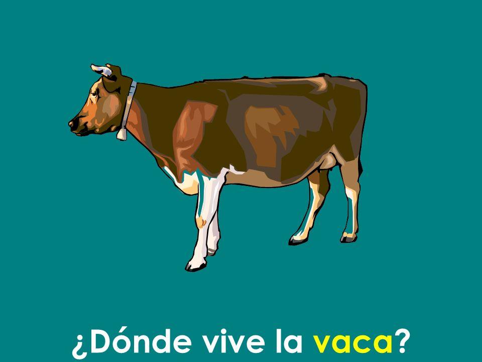 La vaca vive en la granja.