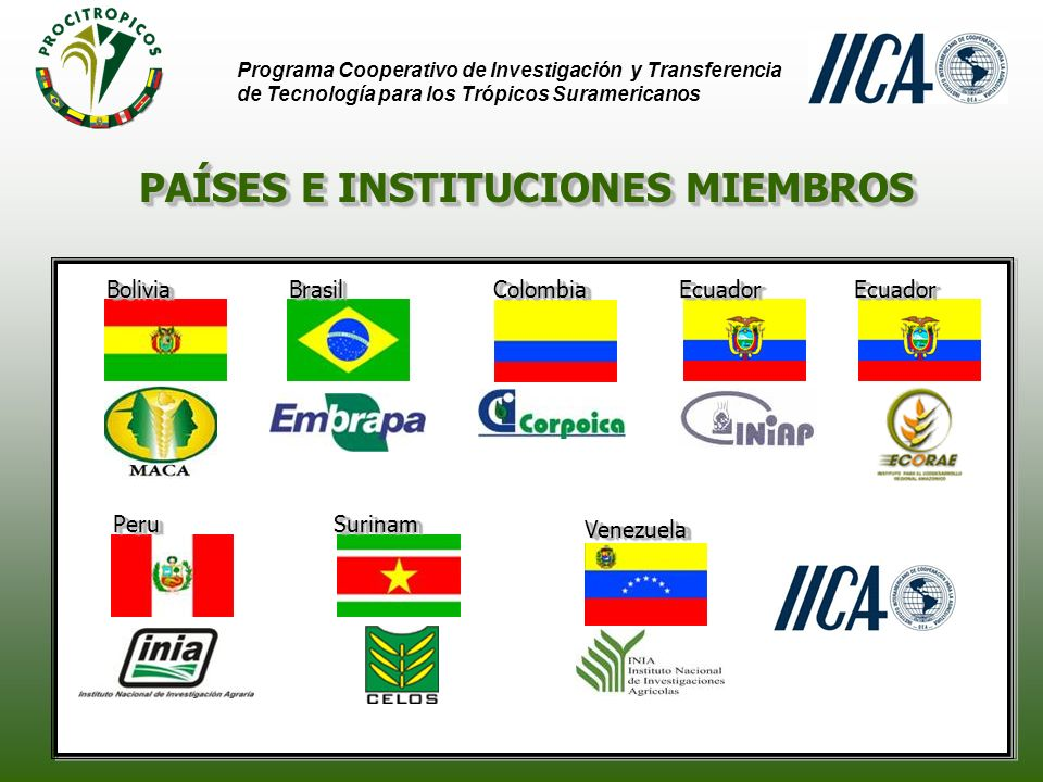 Programa Cooperativo de Investigación y Transferencia de Tecnología para los Trópicos Suramericanos MISION Contribuir a promover el desarrollo sostenible de los trópicos suramericanos por medio de la generación y transferencia de tecnologías agropecuaria y forestal, resultante de la cooperación técnica recíproca entre las instituciones nacionales de innovación tecnológica y el IICA, en beneficio de la sociedad.
