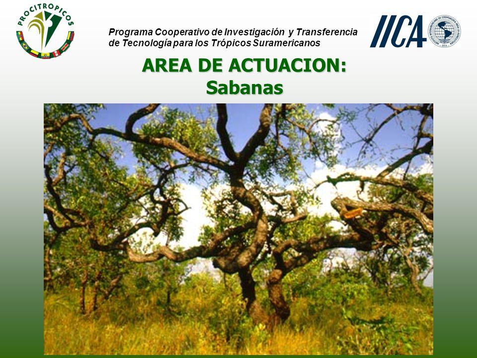 AREA DE ACTUACION: Programa Cooperativo de Investigación y Transferencia de Tecnología para los Trópicos Suramericanos SabanasSabanas