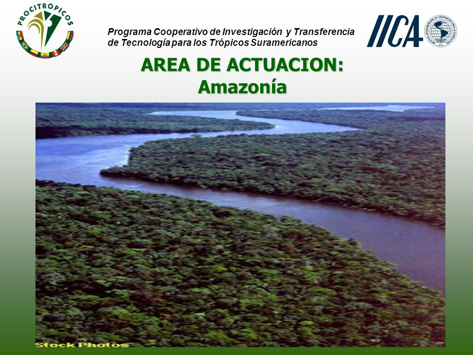 AREA DE ACTUACION: Programa Cooperativo de Investigación y Transferencia de Tecnología para los Trópicos Suramericanos AmazoníaAmazonía