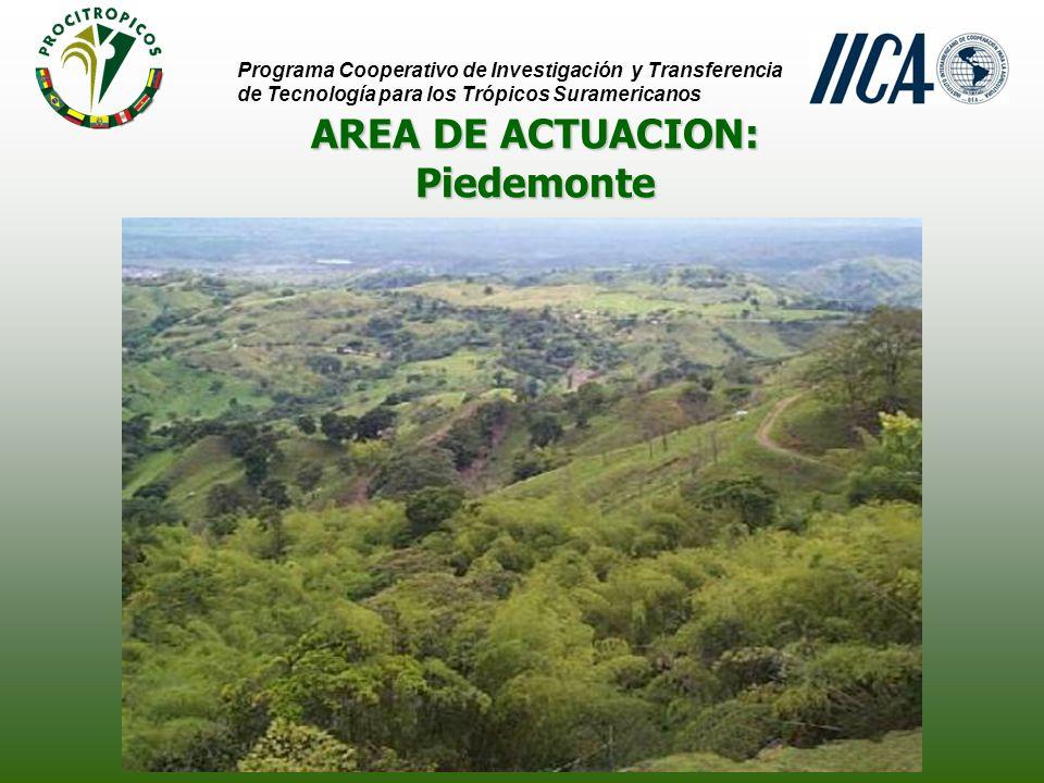 AREA DE ACTUACION: Programa Cooperativo de Investigación y Transferencia de Tecnología para los Trópicos Suramericanos PiedemontePiedemonte