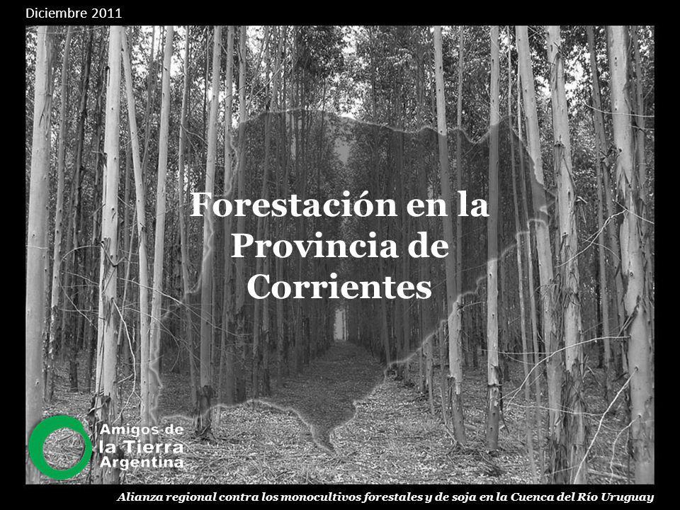 Forestación en la Provincia de Corrientes Entre abril y diciembre de 2008, por solicitud de la provincia de Corrientes, el Consejo Federal de Inversiones (CFI) realizó, mediante la contratación del Ingeniero Forestal Mario Elizondo, y un equipo de colaboradores, el estudio denominado Primer inventario forestal de la provincia de Corrientes: metodología, trabajo de campo y resultados 1.