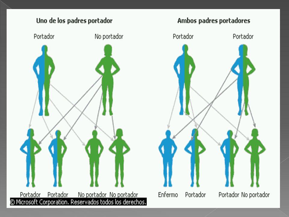 Una persona que tiene sólo una copia del gen recesivo es portadora de ese gen pero no manifiesta la enfermedad.