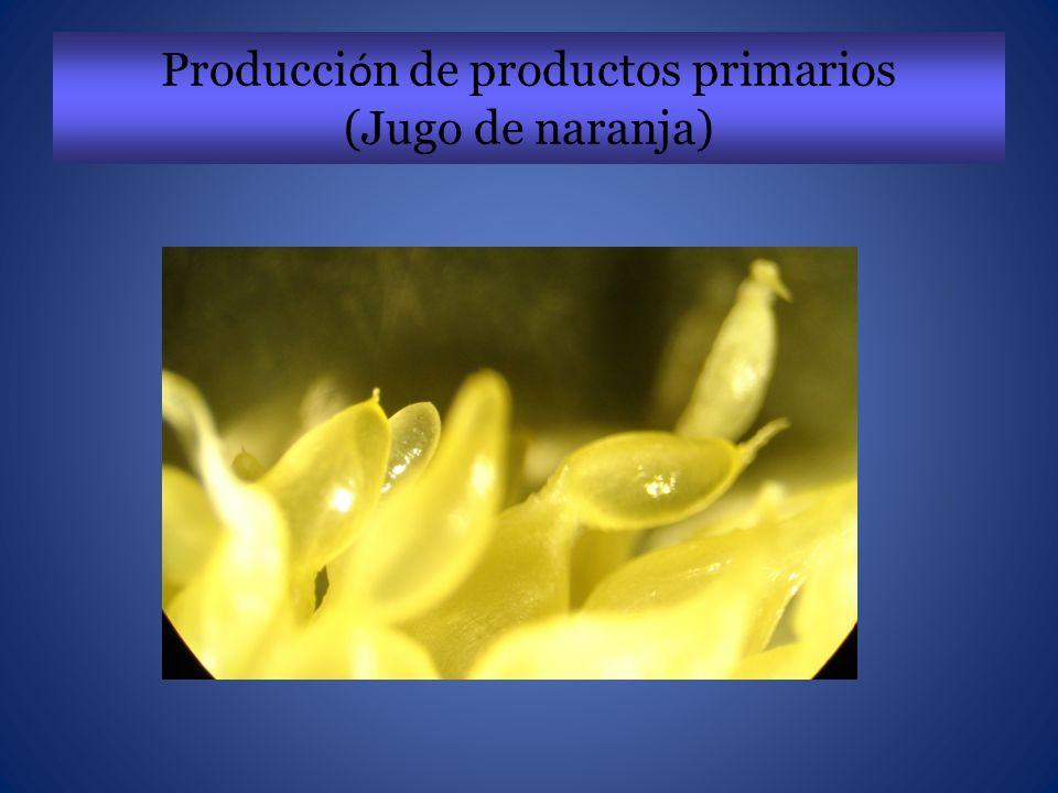 Caña de azúcar como fuente de Biocombustibles Saccharum officinarum
