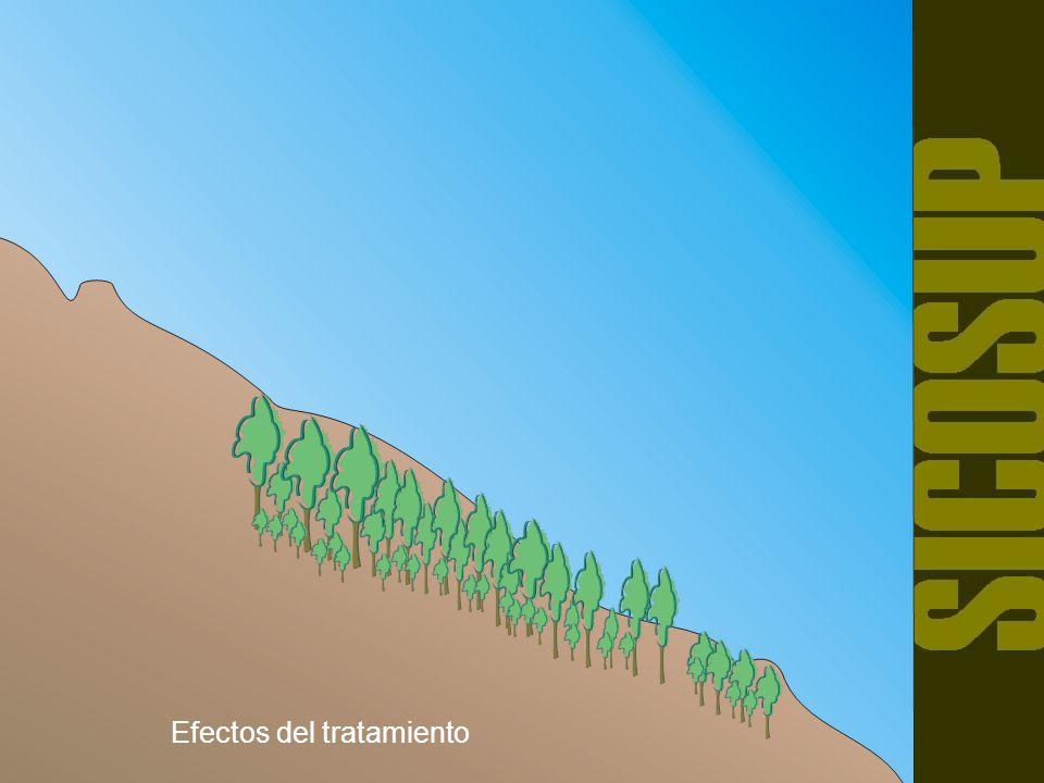 CORTAS SECUNDARIAS Se denomina así a las cortas posteriores a la de semillación que se realiza para continuar abriendo gradualmente la espesura de la masa con la finalidad de favorecer el mayor desarrollo del renuevo ya establecido.