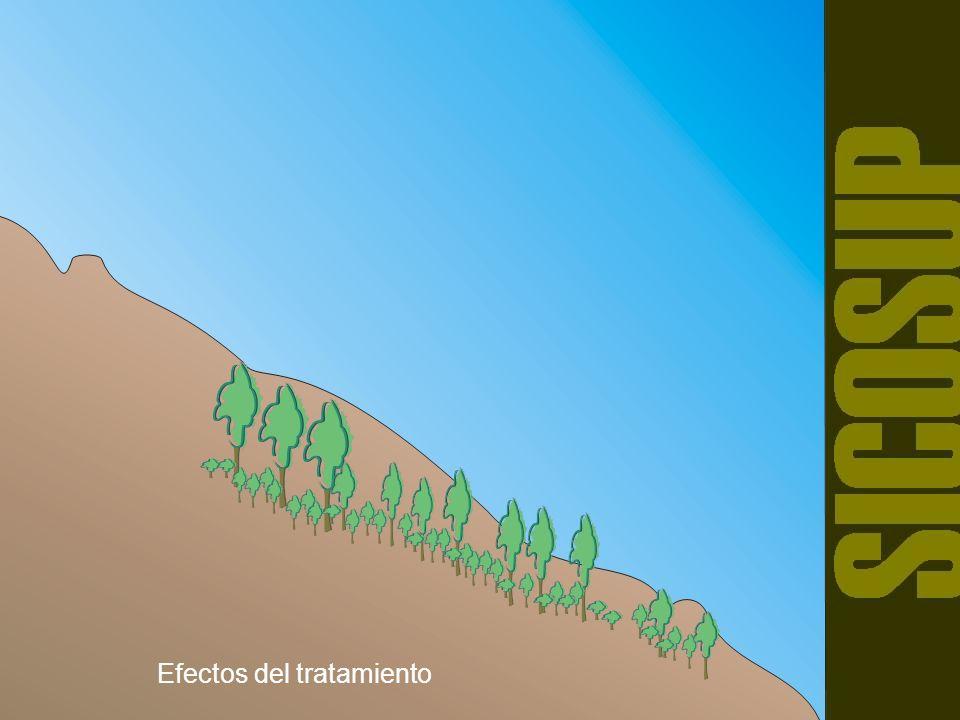 CORTA FINAL, DEFINITIVA, O DE LIBERACIÓN Es la última corta, y se realiza sobre el dosel superior o madura con el fin de remover el resto de los árboles semilleros para liberar a la masa joven y favorecer su desarrollo.