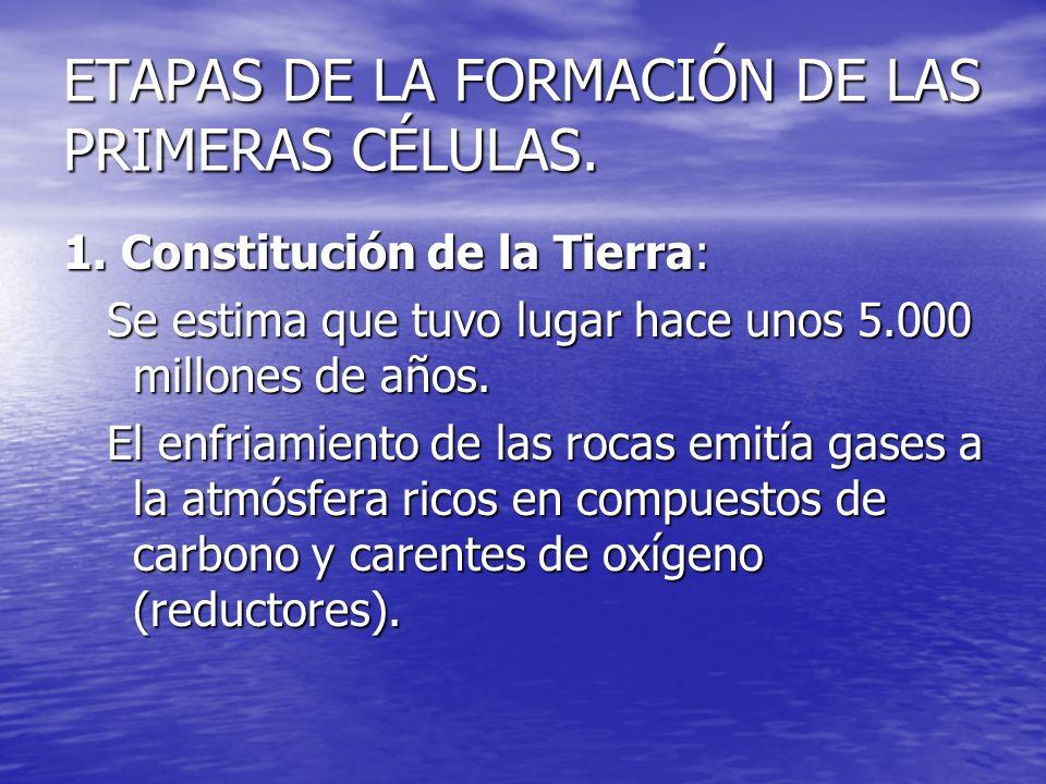 ETAPAS DE LA FORMACIÓN DE LAS PRIMERAS CÉLULAS.2.