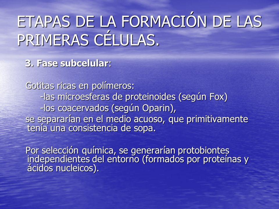 ETAPAS DE LA FORMACIÓN DE LAS PRIMERAS CÉLULAS.4.