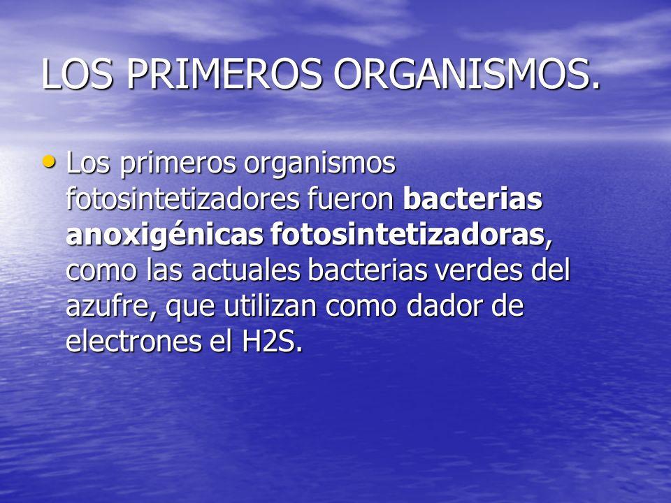 LOS PRIMEROS ORGANISMOS Una auténtica revolución para los organismos fotosintetizadores fue la aparición de células capaces de utilizar el agua como dador de electrones.