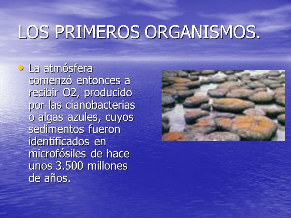 LOS PRIMEROS ORGANISMOS El incremento de oxígeno hizo que la primitiva atmósfera reductora se sustituyese progresivamente por otra oxidante.