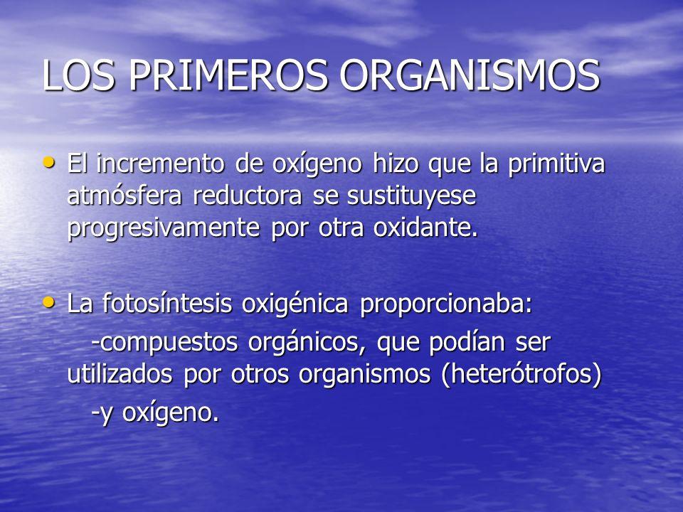 LOS PRIMEROS ORGANISMOS La degradación de compuestos orgánicos con oxígeno es muy rentable energéticamente (respiración celular).