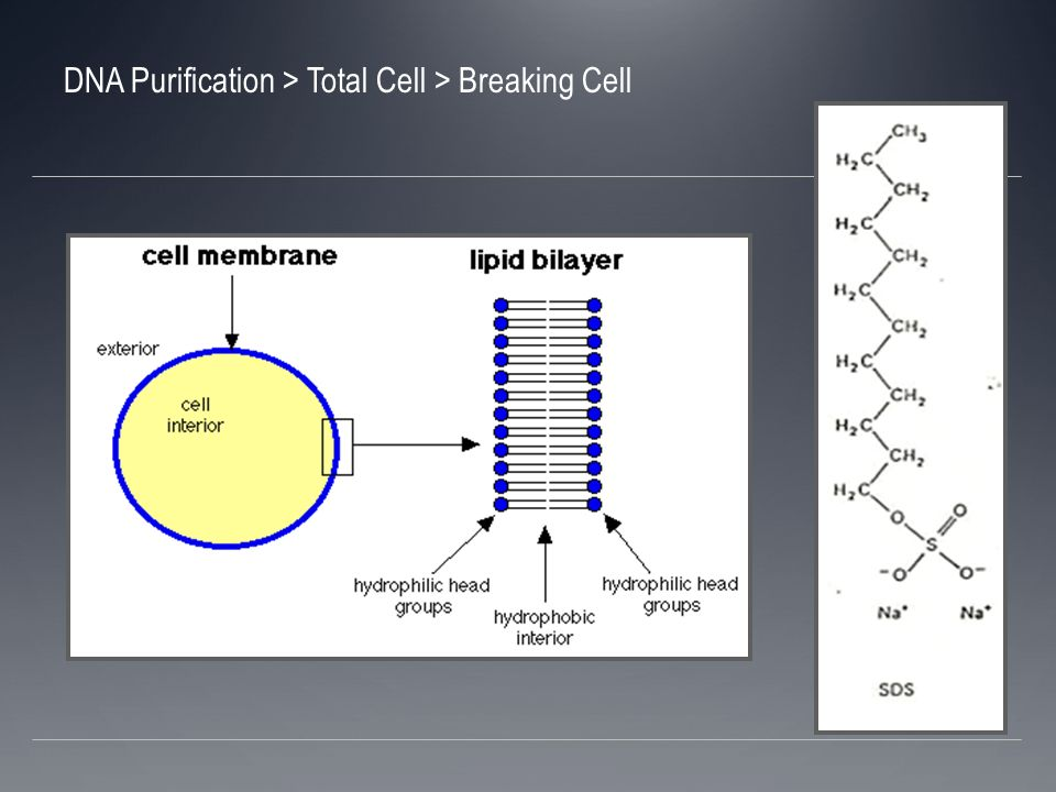 Centrifuge removes insoluble cell debris DNA Purification > Total Cell