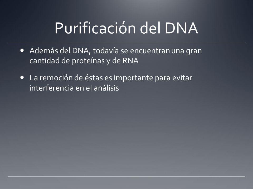 Remoción de proteínas y RNA Extracción orgánica Adición de fenol ó fenol/cloroformo Se precipitan las proteínas; formación de una capa blanca en la interfase entre la capa orgánica y la acuosa Se remueve la solución acuosa