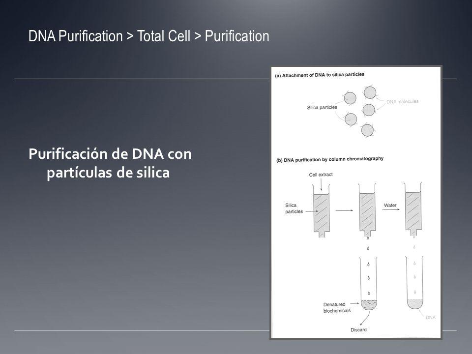Extracción de DNA de otros tipos de células Células vegetales: alto contenido de carbohidratos Lisozima no tienen efecto Se añade CTAB (cetylmethylammonium); se une a los ácidos nucléicos y los precipita Se centrifuga y se remueve el sobrenadante Células animales: no tienen pared, lisan con SDS