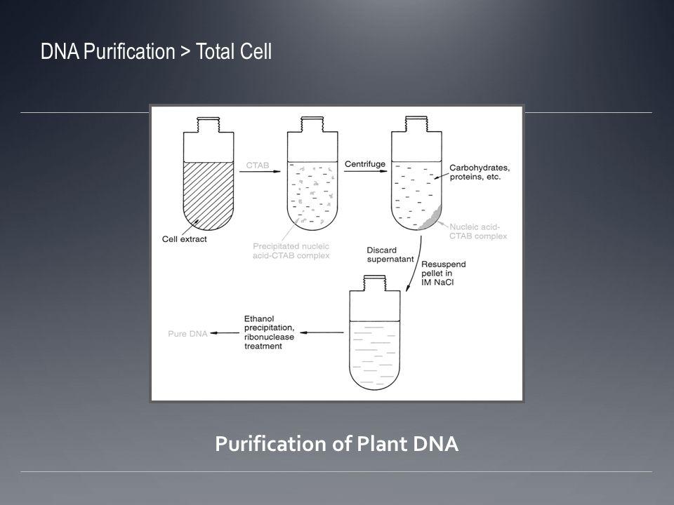 DNA de plasmidio Se crece la bacteria y se colecta Se rompen las células y se libera el contenido Se trata el extracto celular para remover todos los componentes excepto el DNA de plasmidio Se concentra la solución de DNA