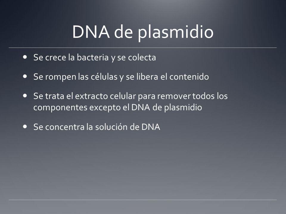 DNA de plasmidio Separación basada en diferencias entre el plasmidio y el DNA bacterial tamaño- plasmidios son mucho más pequeños