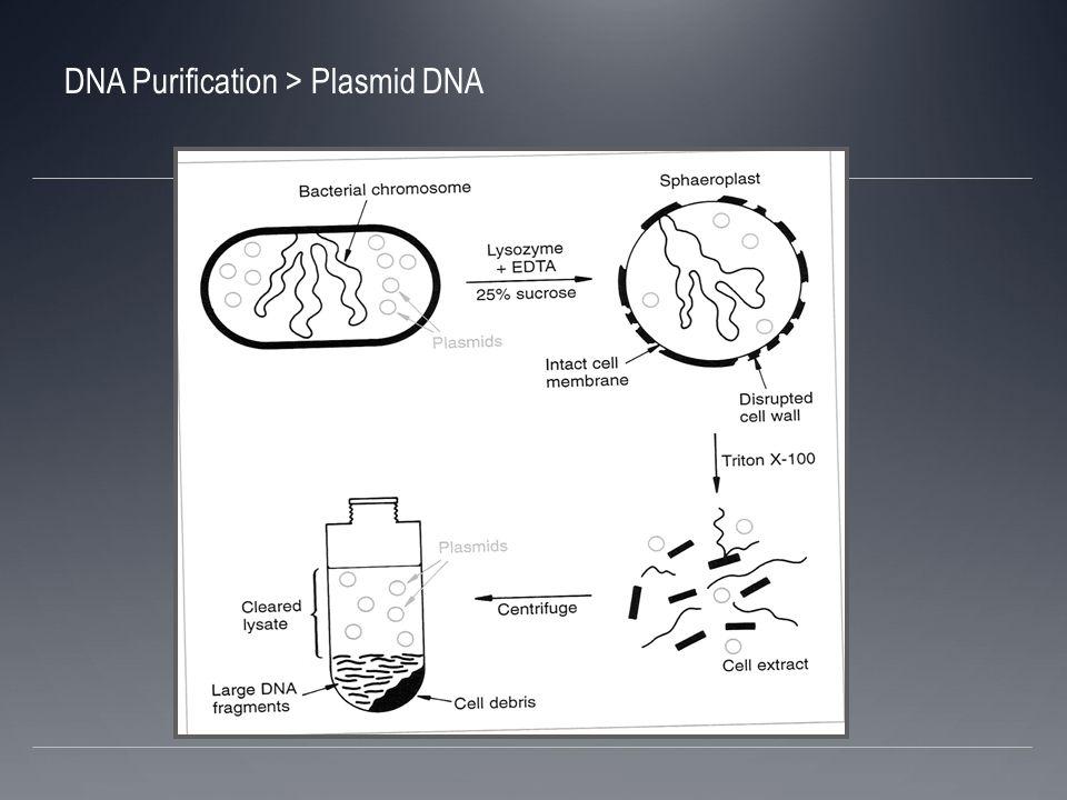 Separación basado en conformación Separación por el ¨superenrollamiento¨de pequeños plasmidios circulares