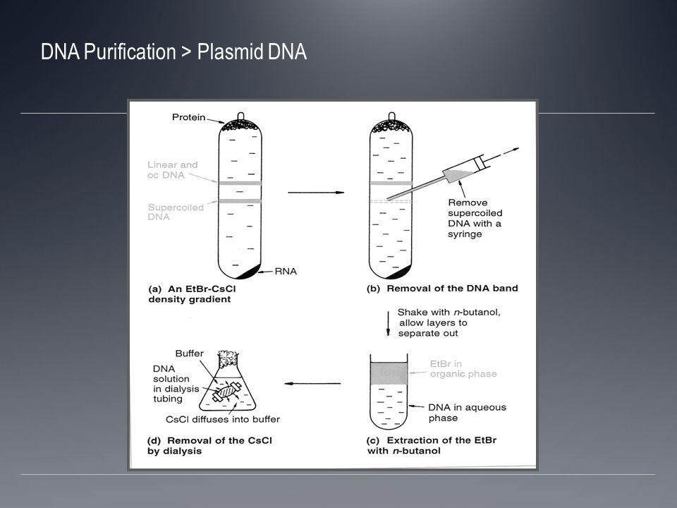 DNA de fagos El DNA de fagos puede estar fuera de la célula; no hay que comenzar con un extracto celular Al centrifugar el cultivo, la bacteria estará en el pellet y el fago en suspensión La dificultad es obtener una concentración grande de fagos por ml de cultivo
