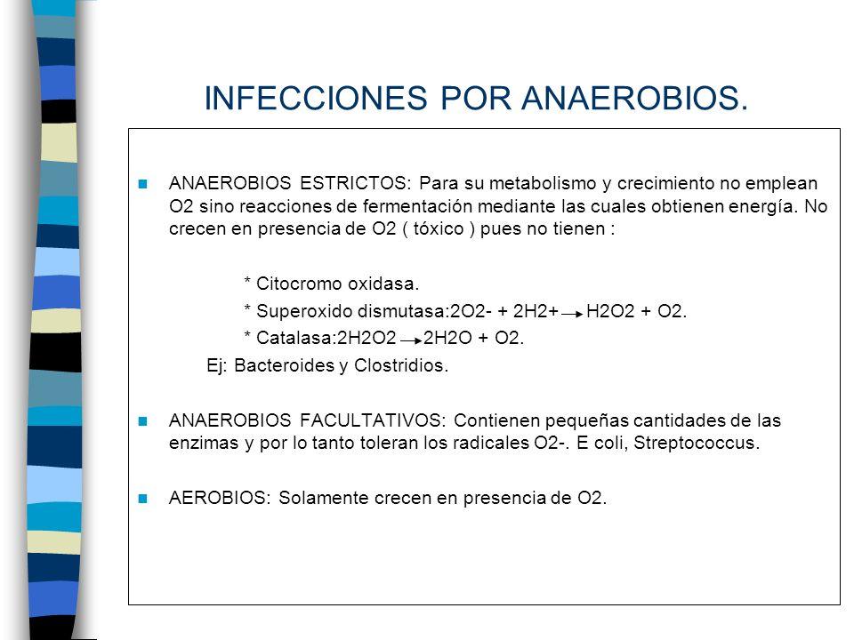 Bacilos Gram -.Bacteroides fragilis. Prevotellas.