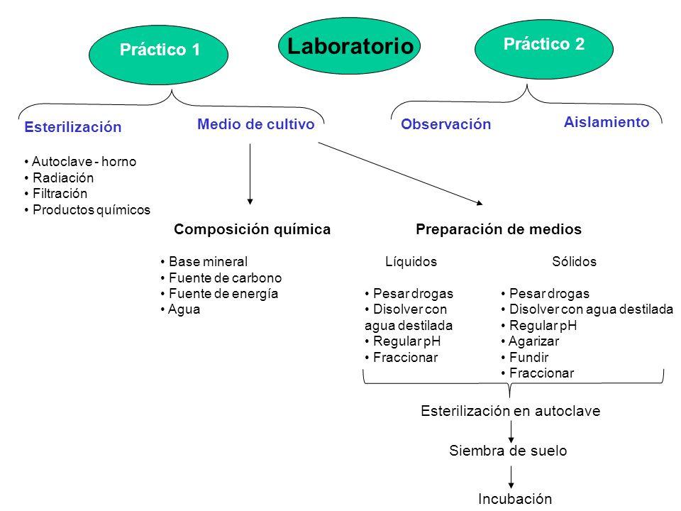 Actividades 1)Preparación de muestras de suelo en laboratorio: tamizar, embolsar y rotular.