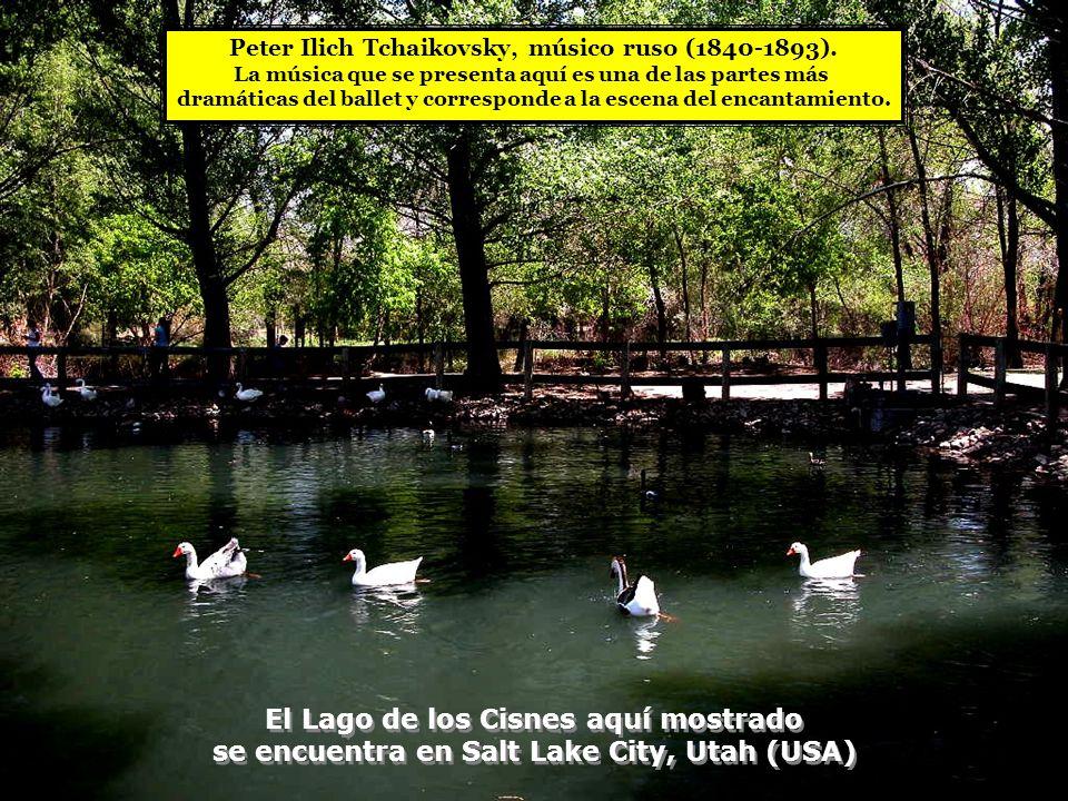 El Lago de los Cisnes aquí mostrado se encuentra en Salt Lake City, Utah (USA) El Lago de los Cisnes aquí mostrado se encuentra en Salt Lake City, Utah (USA) Peter Ilich Tchaikovsky, músico ruso (1840-1893).