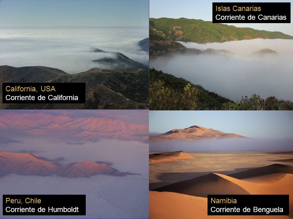 Otras regiones que tienen afloramiento costero: