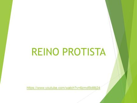 REINO PROTISTA https://www.youtube.com/watch?v=6zmd5b88j24.