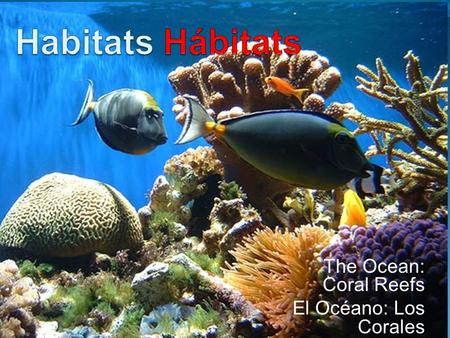 The Ocean: Coral Reefs El Océano: Los Corales. Habitat Hábitat The natural home or environment of a living thing. El hogar ó ambiente natural de un ser.