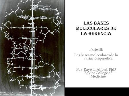 Las bases moleculares de la herencia DNA Model by J. Watson and F. Crick © Cold Spring Harbor Laboratory Archives Parte III: Las bases moleculares de la.