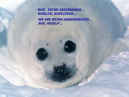 NOS ESTÁN ASESINANDO… AUXILIO, AUXILIOOO... WE ARE BEING ASSASSINATED… SOS, HEEELP...