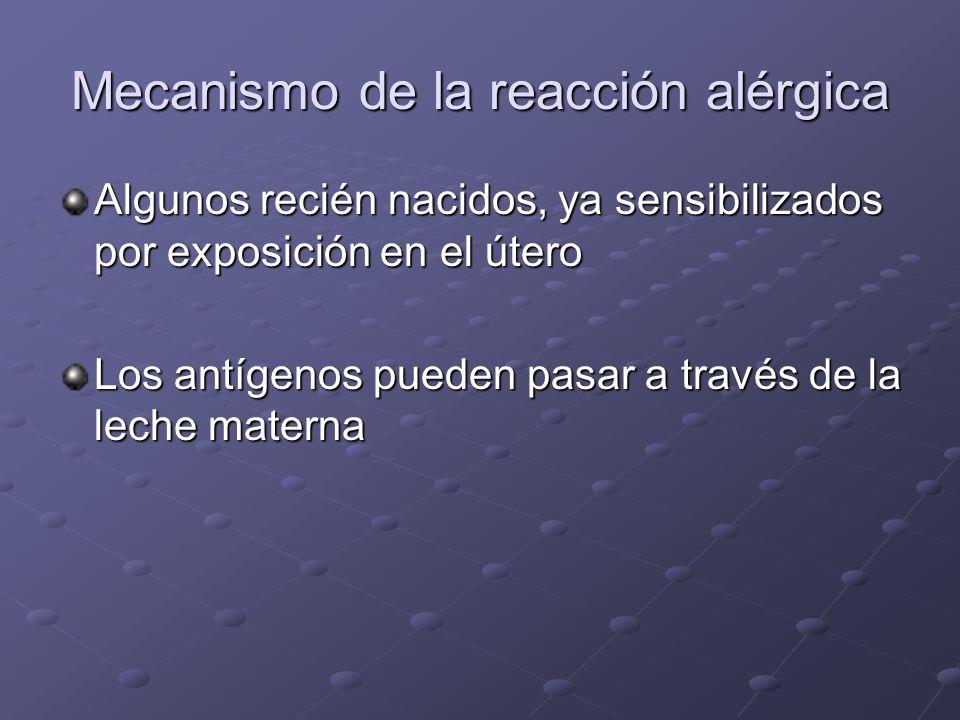 Mecanismo de la reacción alérgica Algunos recién nacidos, ya sensibilizados por exposición en el útero Los antígenos pueden pasar a través de la leche materna