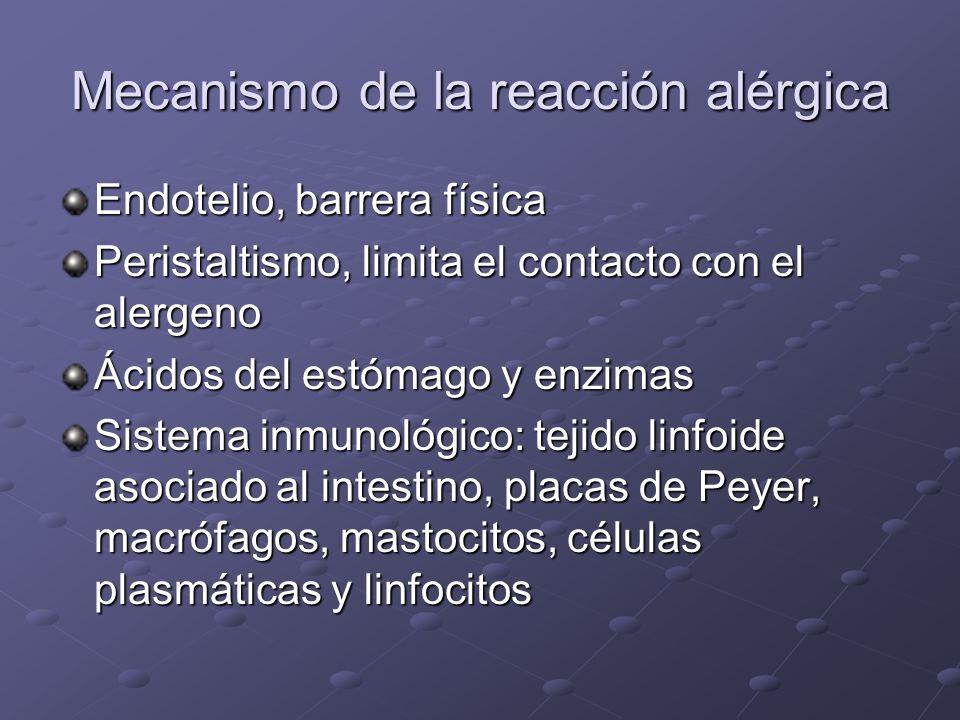 Mecanismo de la reacción alérgica Endotelio, barrera física Peristaltismo, limita el contacto con el alergeno Ácidos del estómago y enzimas Sistema inmunológico: tejido linfoide asociado al intestino, placas de Peyer, macrófagos, mastocitos, células plasmáticas y linfocitos