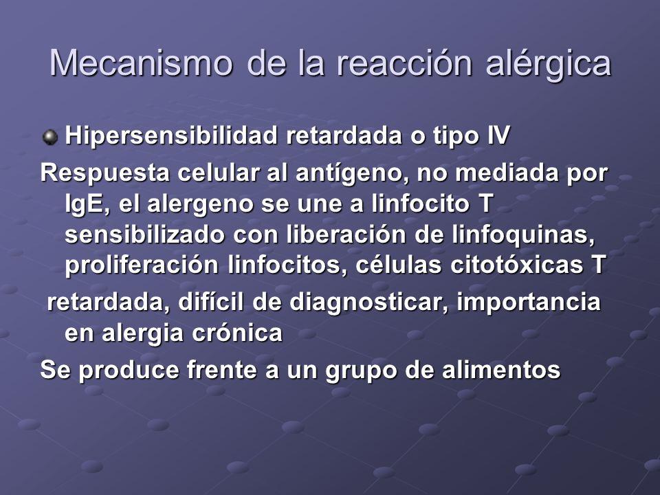 Mecanismo de la reacción alérgica Hipersensibilidad retardada o tipo IV Respuesta celular al antígeno, no mediada por IgE, el alergeno se une a linfocito T sensibilizado con liberación de linfoquinas, proliferación linfocitos, células citotóxicas T retardada, difícil de diagnosticar, importancia en alergia crónica retardada, difícil de diagnosticar, importancia en alergia crónica Se produce frente a un grupo de alimentos