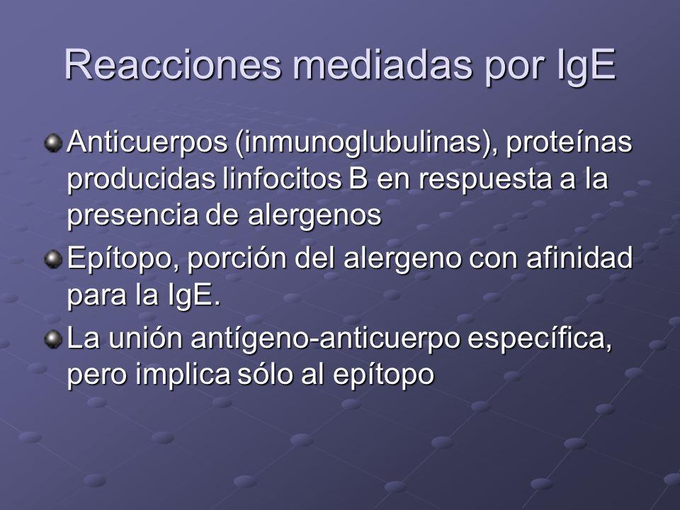 Reacciones mediadas por IgE Anticuerpos (inmunoglubulinas), proteínas producidas linfocitos B en respuesta a la presencia de alergenos Epítopo, porción del alergeno con afinidad para la IgE.