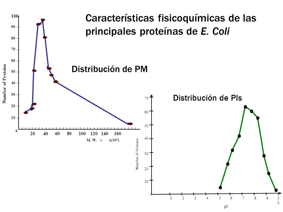 Operaciones de Separación y Purificación de proteínas en gran escala Métodos de Recuperación y purificación y las correspondientes propiedades físicoquímicas involucradas en la operación [*] Operation Physico-chemical property Centrifugation Sedimentation Velocity FiltrationParticle size Microfiltration Particle size Homogeneization Intracellular nature (pressure gradient) Bead milling Intracellular nature (liquid/solid shear) Ultrafiltration Molecular size Two phase extraction Partition coefficient Precipitation Solubility (hydrophobic interaction) Adsorption Van der Waals forces, H bonds, polarities, dipole moments Ion-exchange Charge (titration curve) Hydrophobic interaction Surface hydrophobicity Affinity chromatographyBiological affinity Gel filtration Molecular size Reversed phase liquid chromatographyHydrophilic and hydrophobic interactions [*] Prokopakis and Asenjo (1990)