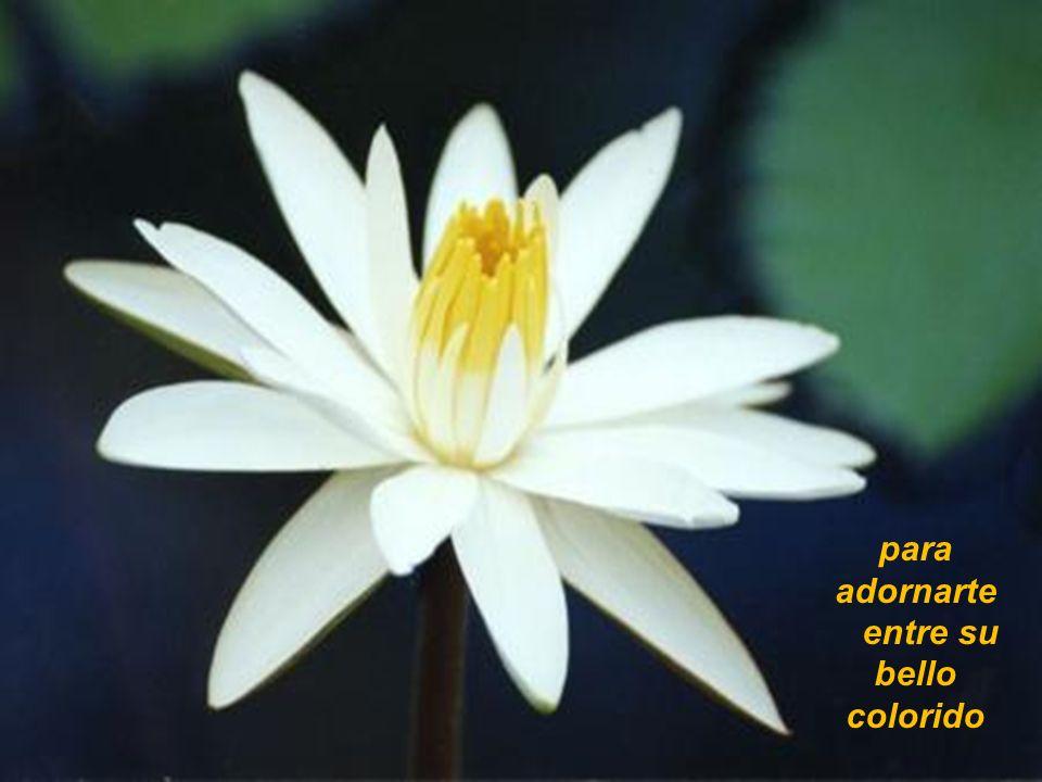 para adornarte entre su bello colorido