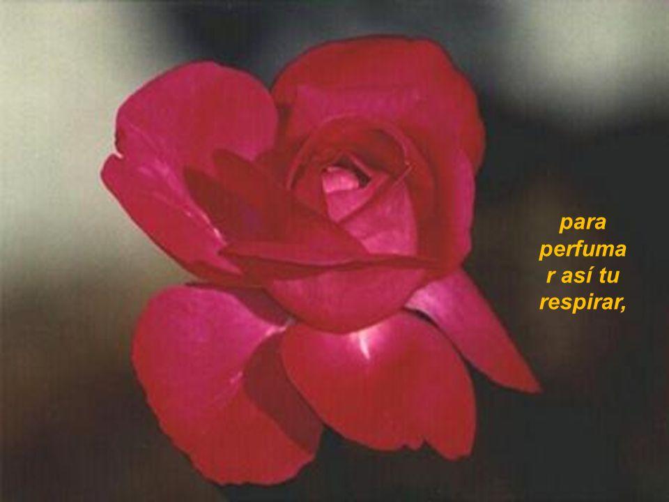 para perfuma r así tu respirar,