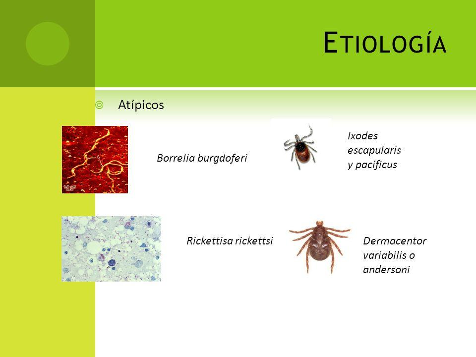 F ISIOPATOLOGÍA 1. Foco infeccioso – infectante 2. Bacteriemia* 3. Invasión del SNC