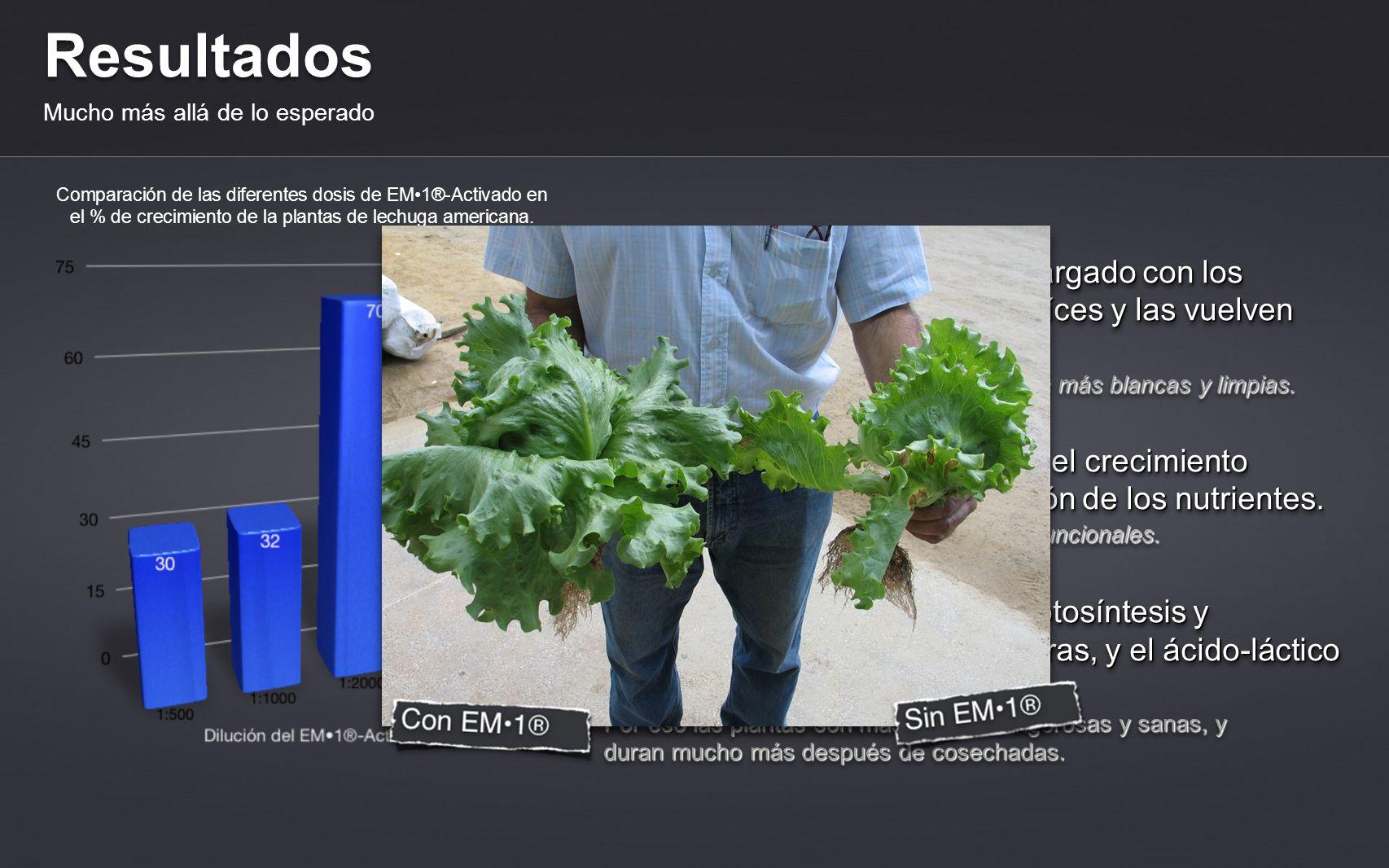 Resultados Mucho más allá de lo esperado Plantas más sanas y más resistentes.