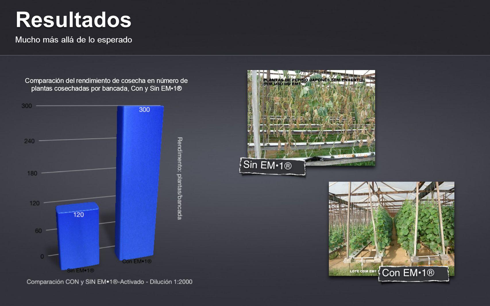 Una Experiencia Muy Exitosa Conclusión Los resultados alcanzados en la hidroponía podrán ser replicados para todos los cultivos hidropónicos y tradicionales de importancia económica en Brasil.