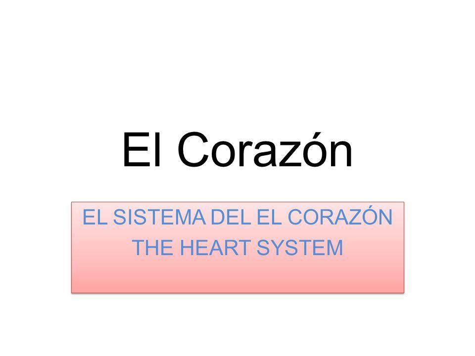El Corazón El corazón tiene cuatro compartimientos, o cámaras.